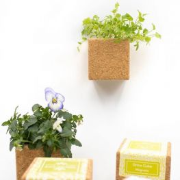 Grow Cube Life in a Bag